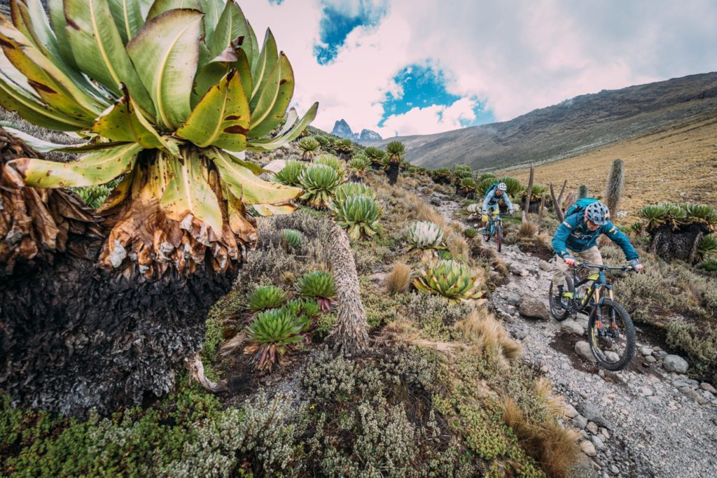 mt_kenya_and_kili_by_martin_bissig_1486